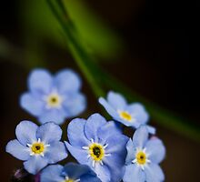 Forget Me Not? by CormacEby