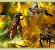 Collage of Pollinators by Betsy  Seeton