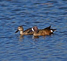 Mr. And Mrs. Teal by Tim Denny