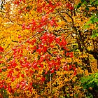 Autumn Colours by CormacEby