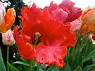 Beautiful From Inside and Out - Parrot Tulips in Philadelphia by MotherNature