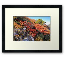 Fagus Update from Mount Campbell Framed Print