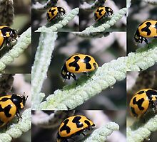 Ladybird Collage by alycanon
