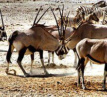 Oryx by Carole-Anne