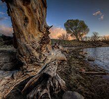 Lumbering To Sunset by Bob Larson