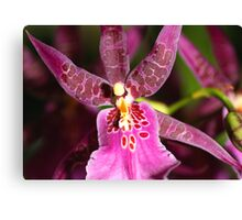 Zygopetalum in Pink Canvas Print