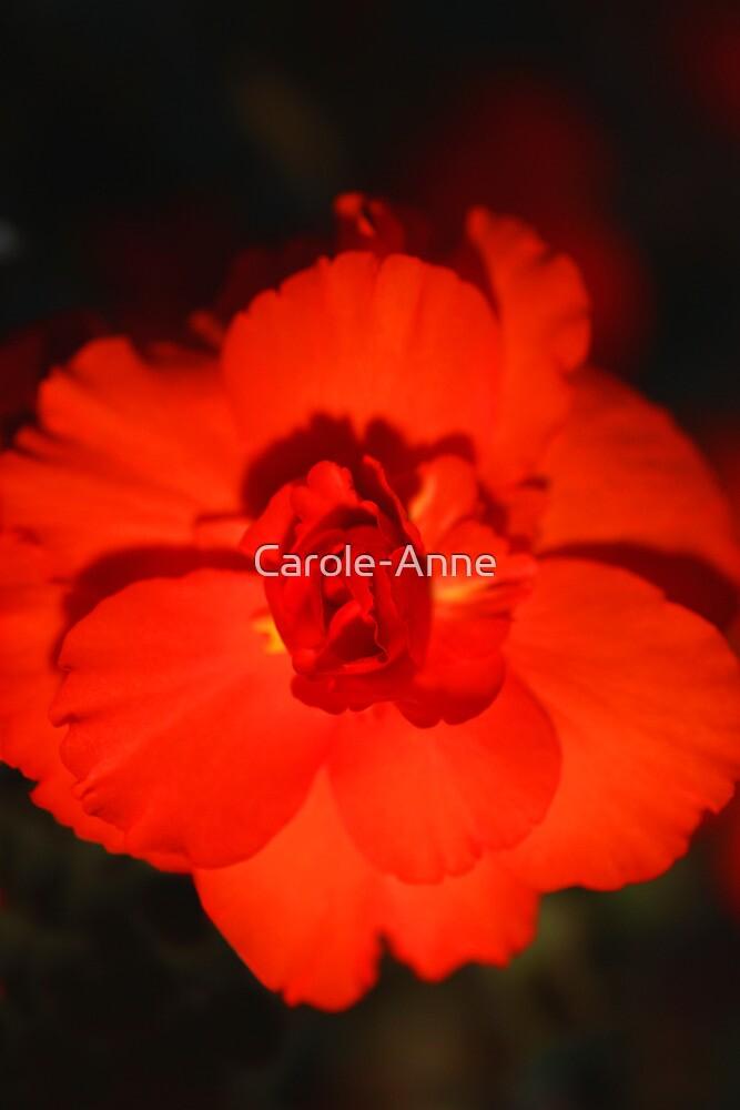 Glowing Bloom by Carole-Anne