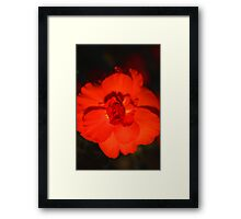 Glowing Bloom Framed Print