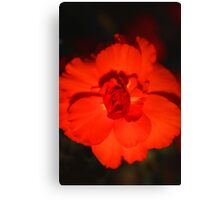 Glowing Bloom Canvas Print