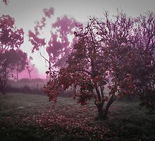 Purple morning by Louise Delahunty