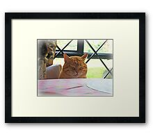 When Cats Pray Framed Print