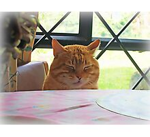 When Cats Pray Photographic Print