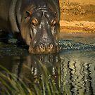 HippO' Hip Hippopotamus by LJ_©BlaKbird Photography