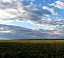 Oregon Roadside by Brenda Dahl
