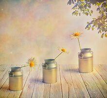 Three daisies by Veikko  Suikkanen