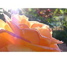 Rosy Layers Photographic Print