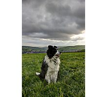 Faithful Hound Photographic Print