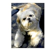"""Adorable Pooch""  Photographic Print"