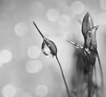 Bokeh Moss by Shelly Harris