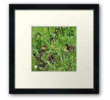 Playing Hide and Seek... Framed Print