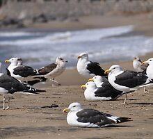 seagulls in papudo by Daidalos