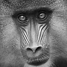 Ape #2 by Yannick Verkindere
