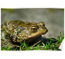 representative of the amphibians Poster