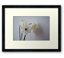 snow white daffodils Framed Print