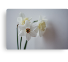 snow white daffodils Canvas Print