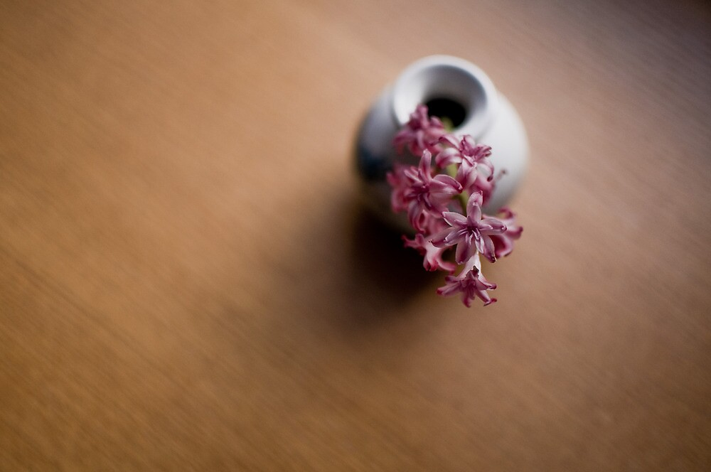 hyacinth by Anete Bauere