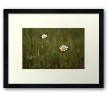 Two daisies Framed Print
