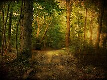 Sunset in the Woods by Susan  Kimball