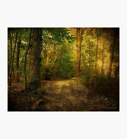 Sunset in the Woods Photographic Print