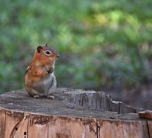 Life of a Chipmunk by HanieBCreations
