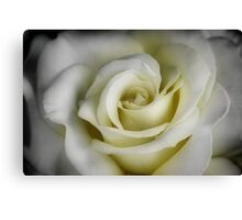 Rose in White Canvas Print