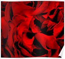 Garden flower Poster