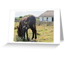 Baby Donkey Foal - 1 day old Greeting Card