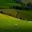 Sheep May Safely Graze by Sarah Walters