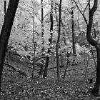 Trees in Autumn by Jon Fassett