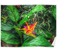 Bird of Paradise in a sea of green leaves Poster
