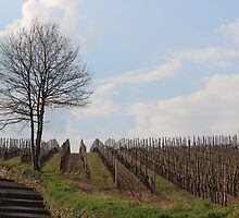 Vineyard in Bad Kreuznach by karina5
