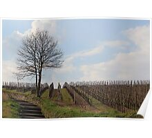 Vineyard in Bad Kreuznach Poster