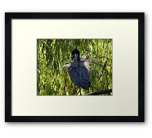 Do You Like My Rear Too? - Te Gusta Mi Trasero Tambien? Framed Print