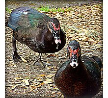 Muscovy Colors Photographic Print