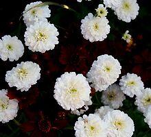 Botany 12 by Roddy Fitzgerald
