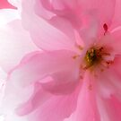 pink season by wistine