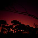 A Red Sunset by Eve Parry
