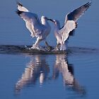 Dancing Gulls by Paul Gana