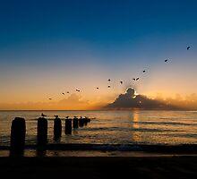 Morning Flight by photogenpix