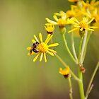 Bee-utiful by Brooke Winegardner